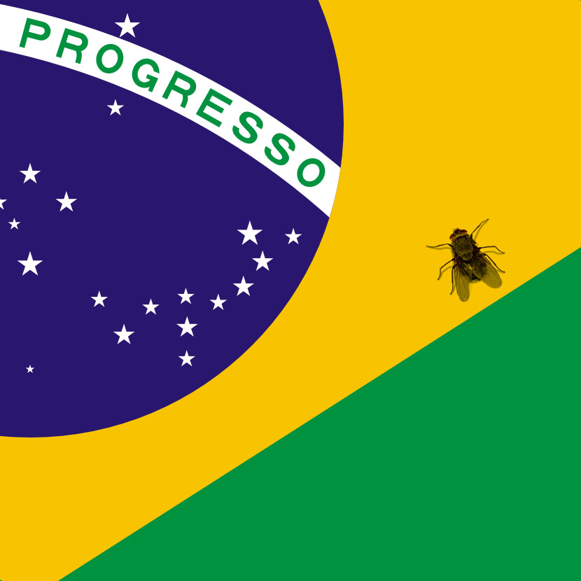 Cropped Brazilian flag with a fly walking on it.